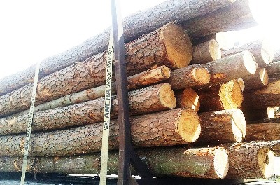 SOUTHERN YELLOW PINE LUMBER FROM CANADA