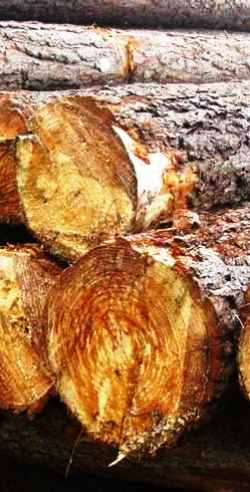 SOUTHERN YELLOW PINE SUPPLY